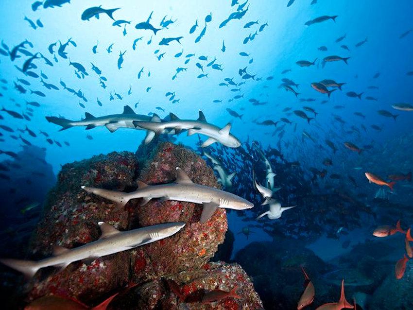Reportage: isla de Cocos, un paradiso da preservare