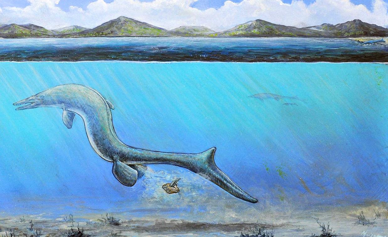 La straordinaria scoperta in Antartide di un gigantesco uovo appartenente ad un rettile marino del tardo Cretaceo