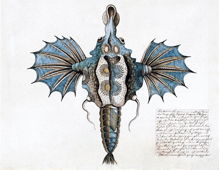 Il pesce pegaso di Emilia Fulgido