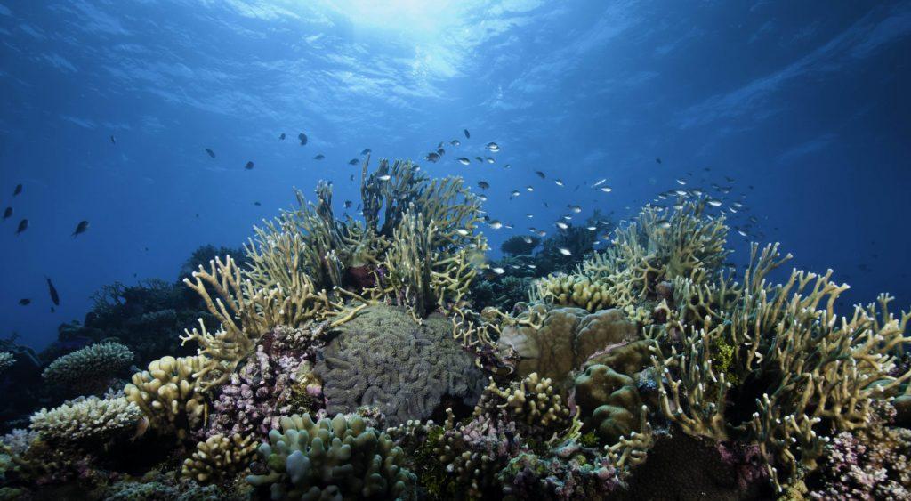 Questa immagine ha l'attributo alt vuoto; il nome del file è barriera-corallina-in-australia-1024x563.jpg