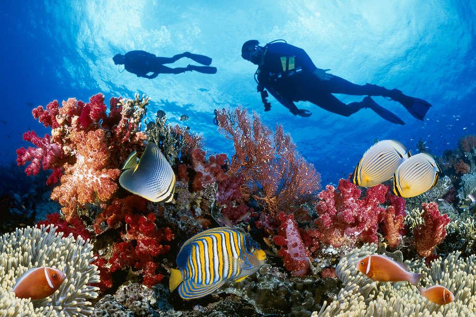 Questa immagine ha l'attributo alt vuoto; il nome del file è coral-reef-subacquei.jpg