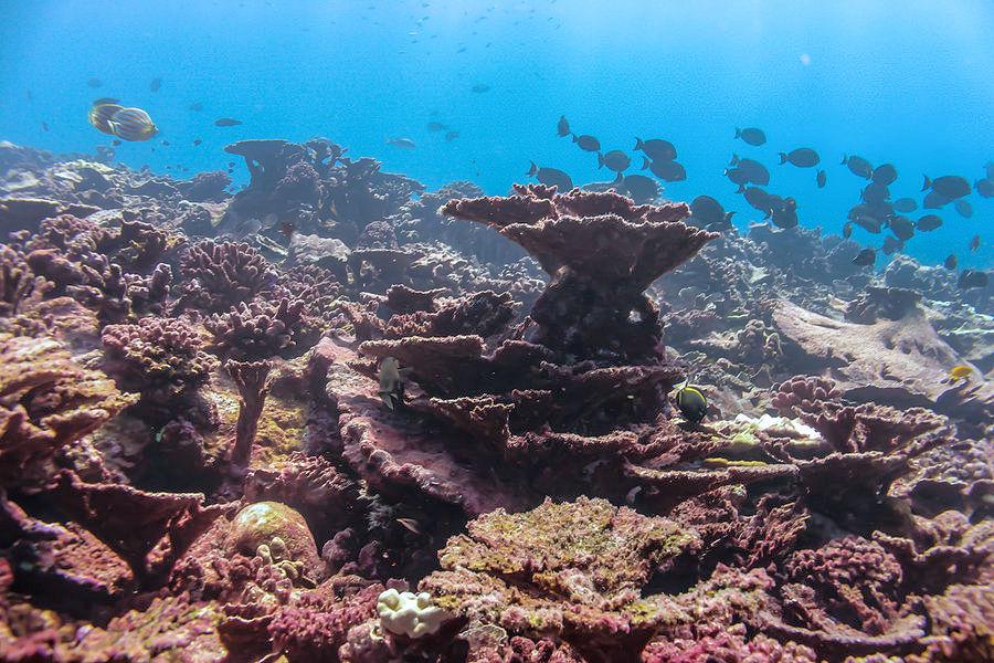 Questa immagine ha l'attributo alt vuoto; il nome del file è coralli-barriere-morenti-1.jpg