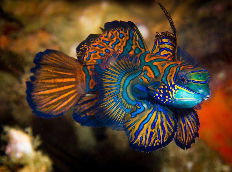 Questa immagine ha l'attributo alt vuoto; il nome del file è mandarino-pesce-yap.png