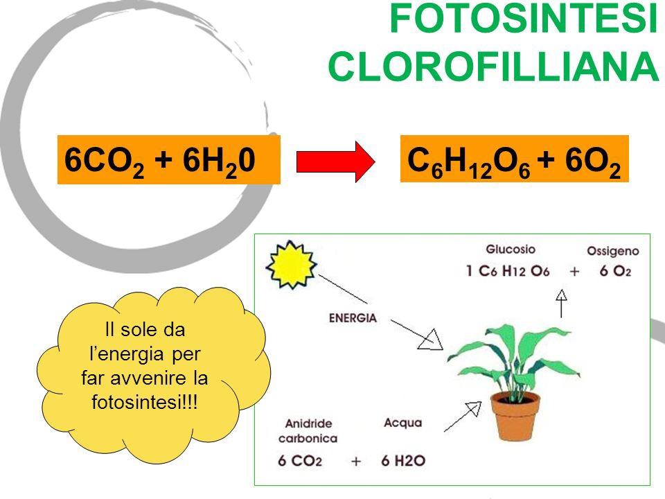 Questa immagine ha l'attributo alt vuoto; il nome del file è fotosintesi-clorofilliana.jpg