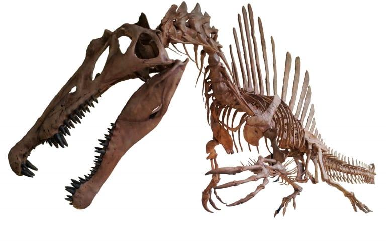 Questa immagine ha l'attributo alt vuoto; il nome del file è Spinosaurus-cretaceo.jpg
