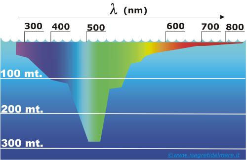 Questa immagine ha l'attributo alt vuoto; il nome del file è assorbimento-luce-acqua-1.png