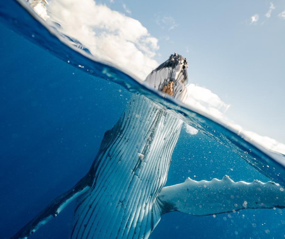 Questa immagine ha l'attributo alt vuoto; il nome del file è luis-sepulveda-balene.png