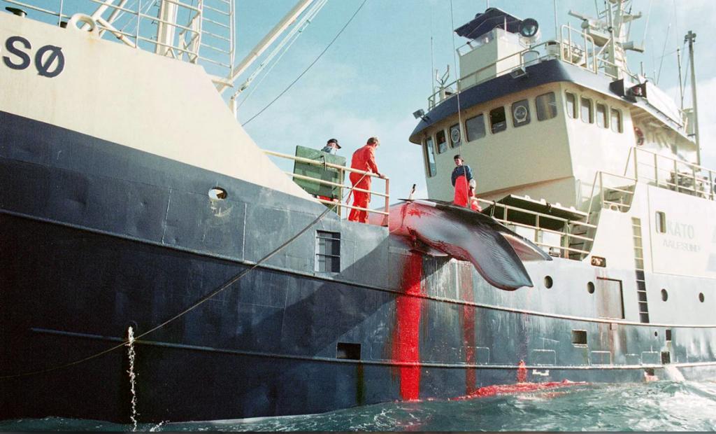Questa immagine ha l'attributo alt vuoto; il nome del file è whaling-1024x620.png