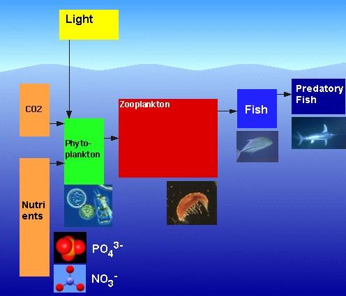 Questa immagine ha l'attributo alt vuoto; il nome del file è catena-alimentare-marina.jpg