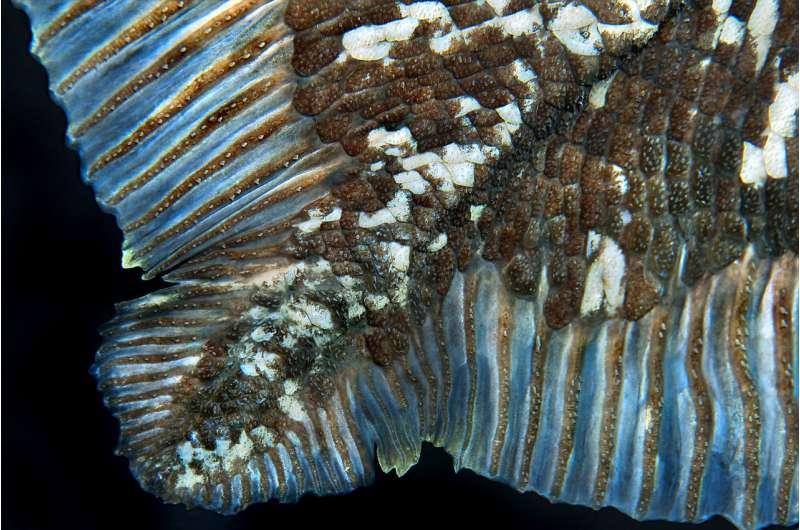 Questa immagine ha l'attributo alt vuoto; il nome del file è coelacanths-Batista-credit.jpg