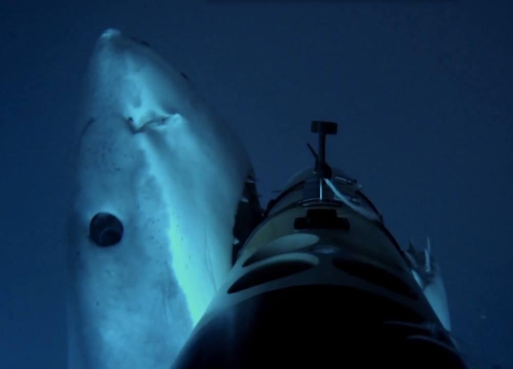 Il robot e lo squalo
