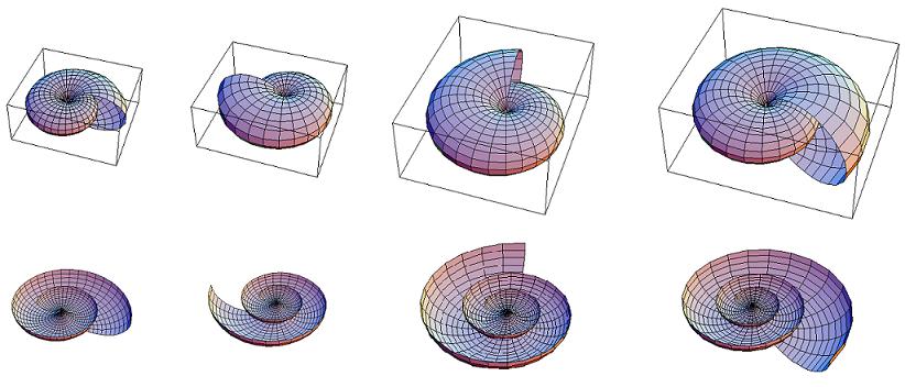 Questa immagine ha l'attributo alt vuoto; il nome del file è crescita-a-spirale-di-un-Nautilus.png