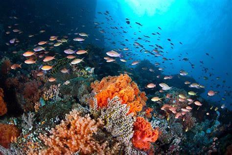 Questa immagine ha l'attributo alt vuoto; il nome del file è coral-reef.jpg