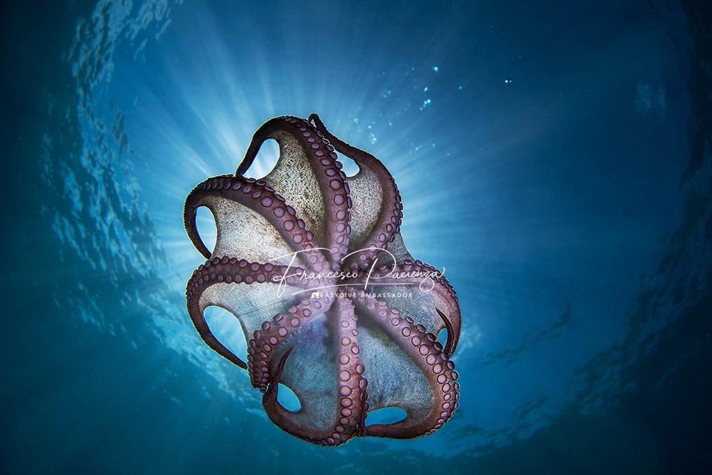 Principi di ottica subacquea: Prospettive future per l'imaging subacqueo - parte VI di Andrea Mucedola