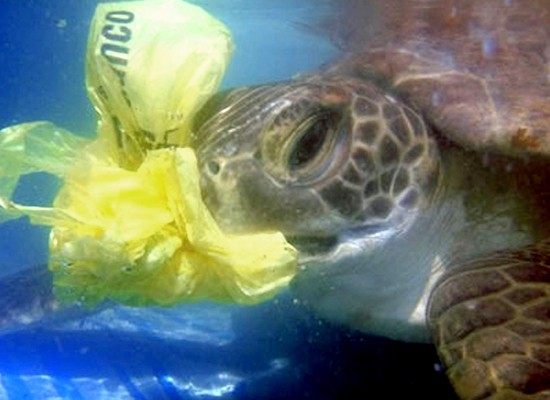 Silent Killers, The Danger of Plastic Bags to Marine Life by Laura Beans