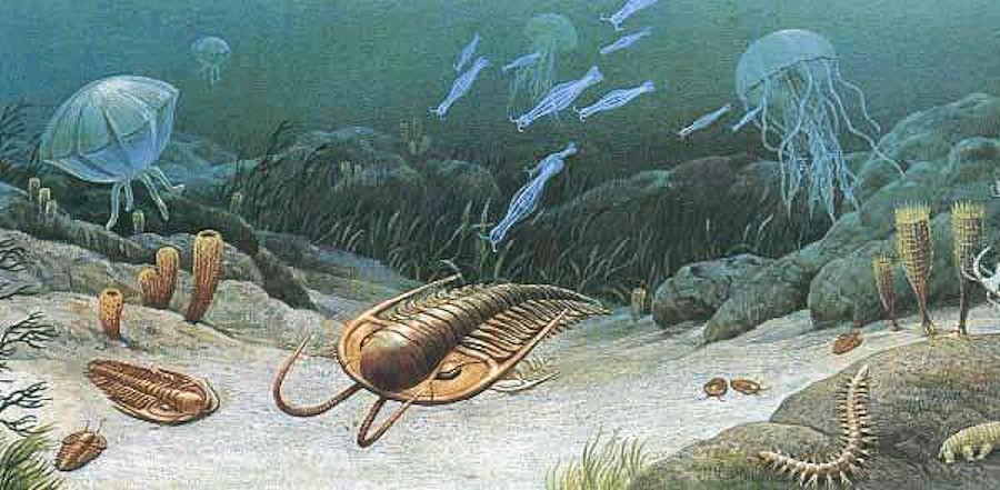 Dal Cambriano all'Ordoviciano:  viaggio nei proto-mari - Parte V
