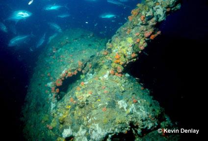 I relitti della battaglia dello stretto della Sonda stanno scomparendo misteriosamente