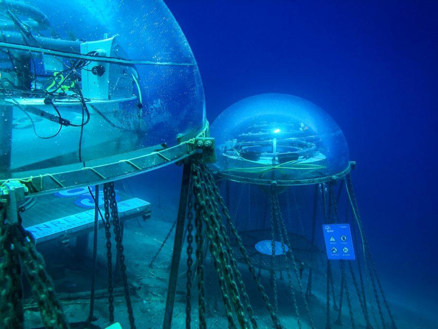 I giardini di Nemo, una speranza per la nostra sopravvivenza