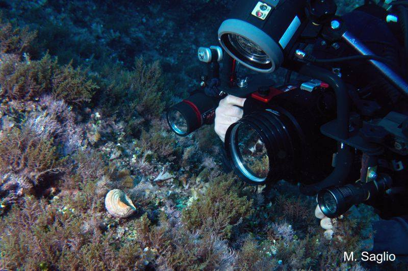Macro o Ambiente? Piccole pillole di fotografia subacquea di Fabio Carnovale