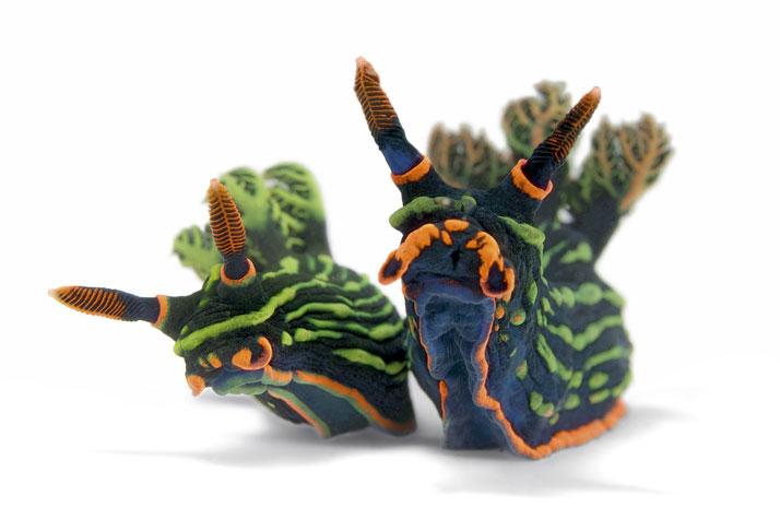 Nudibranchi ... meraviglie del mare di Andrea Mucedola
