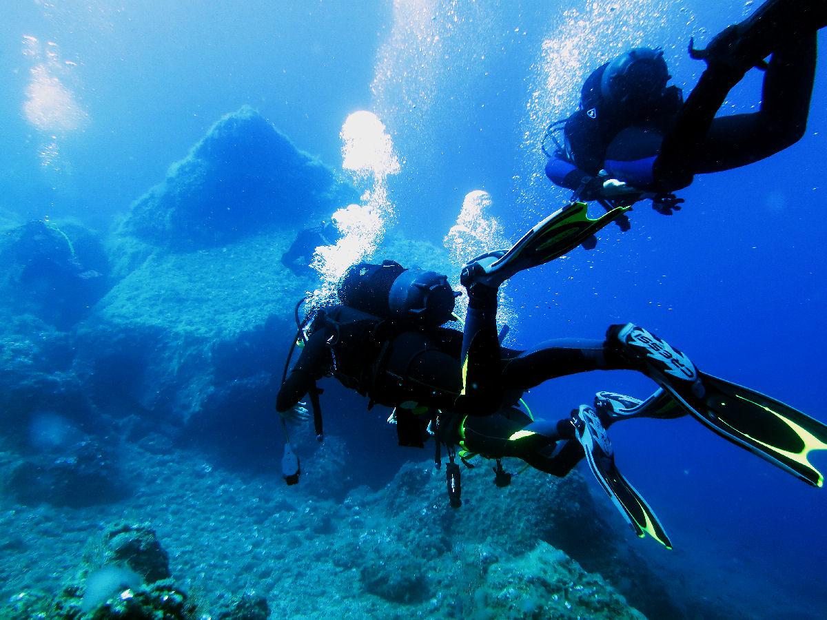 Mammiferi terrestri ed ambiente sottomarino: uno strano connubio di Luca Cicali