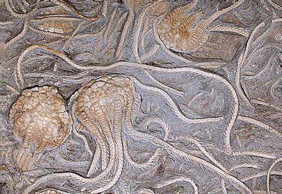 L'Archeozoico: la nascita della vita negli oceani - Parte II  di Andrea Mucedola