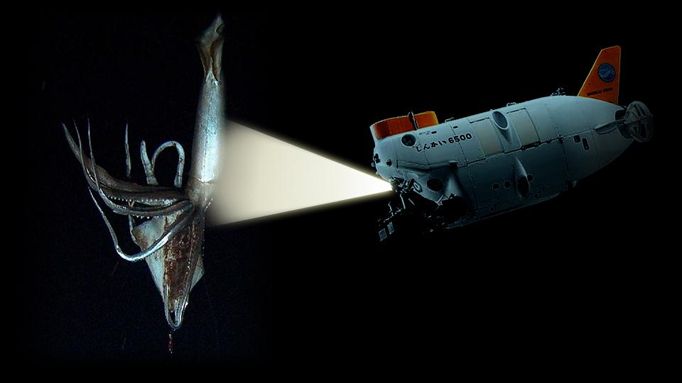 Calamari giganti, dalle cronache antiche fino ai giorni nostri di Andrea Mucedola