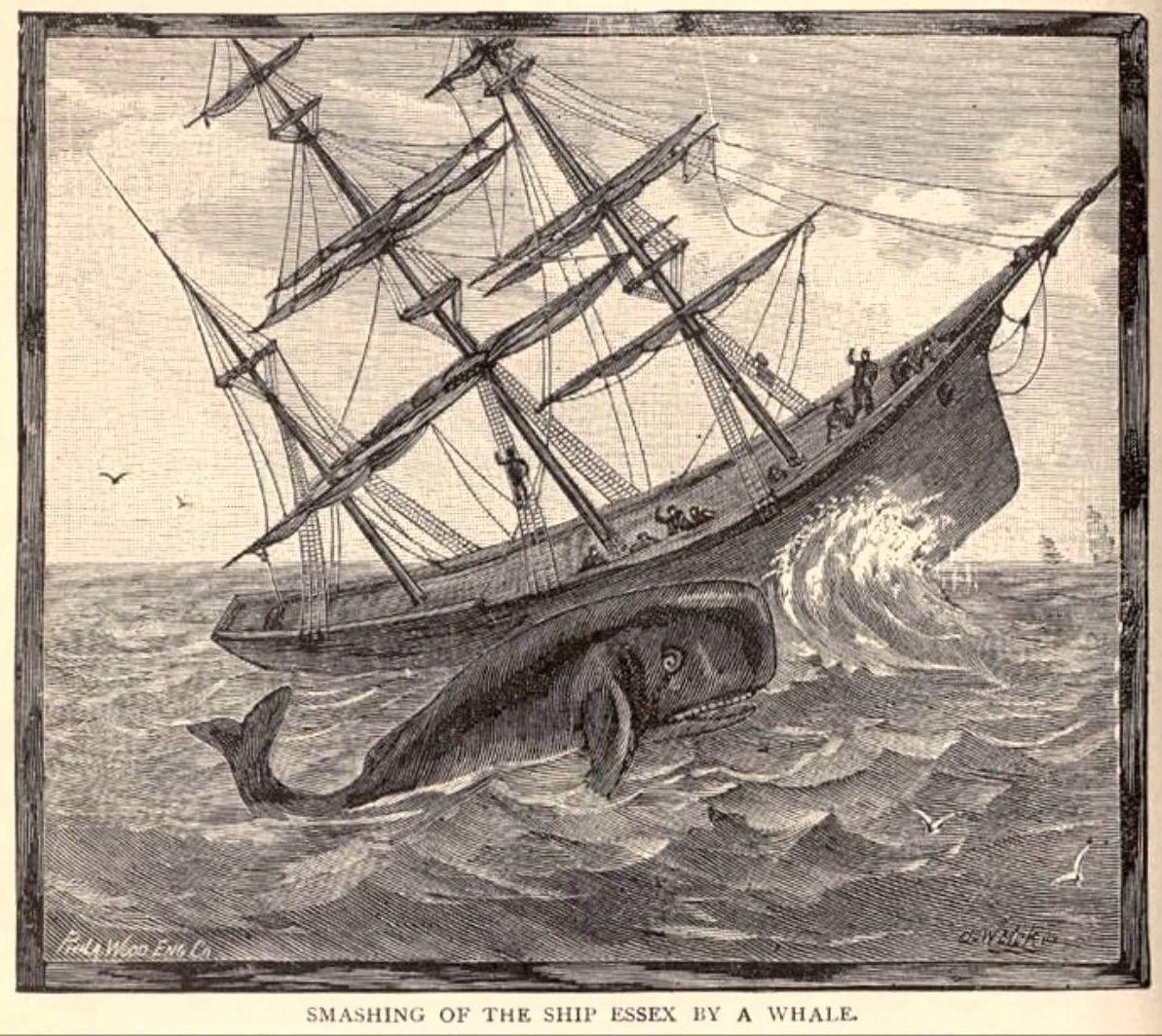 La terribile storia dei sopravvissuti dell'Essex: cannibalismo in alto mare nel XIX secolo di Andrea Mucedola