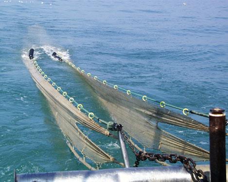Lo strascico, verso una pesca più consapevole