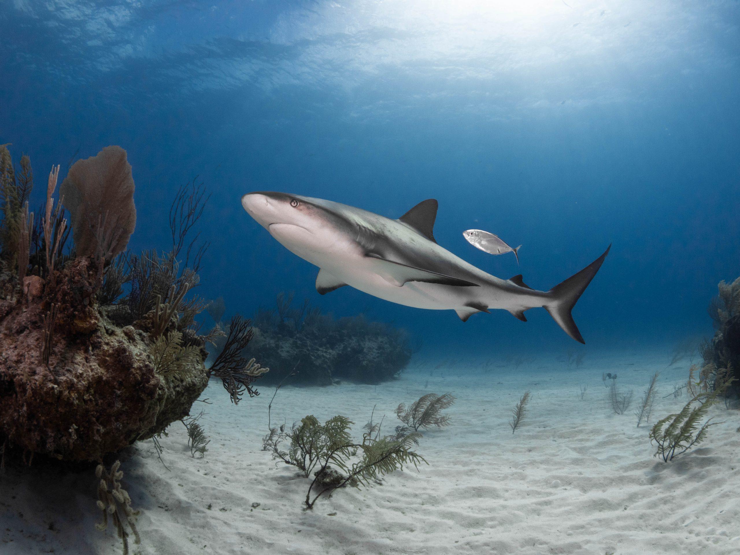 La signora che sussurra agli squali: Cristina Zenato
